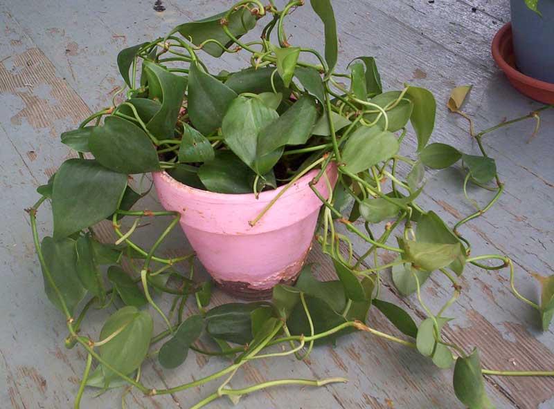 Plantes toxiques pour les chats - Plante non toxique pour chat ...